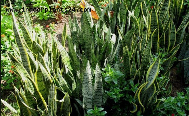snake2bplants2bpictures-3925275