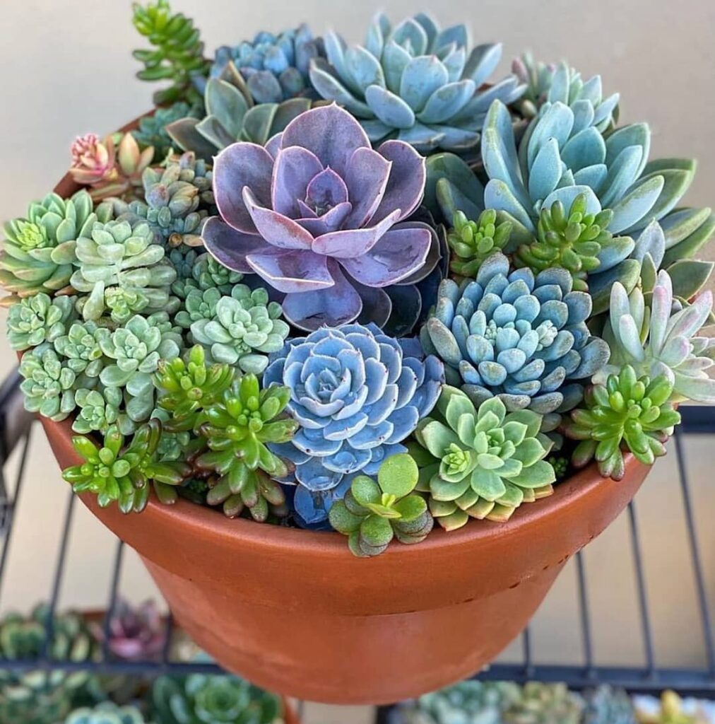 succulents world 131472097 826385264850267 9068999510880979651 n