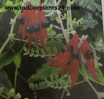 indoor2bplants2b2-9921166