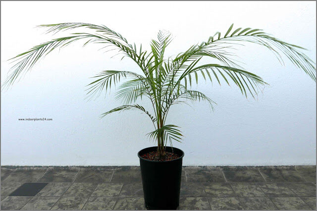 palm2bplant2btypes-3916966
