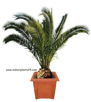 types2bof2bindoor2bpalm2bplants-4506428